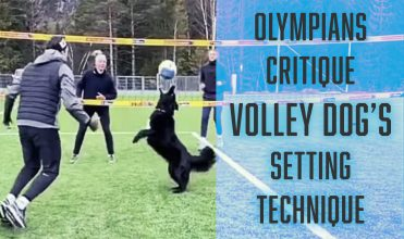 volley dog setting